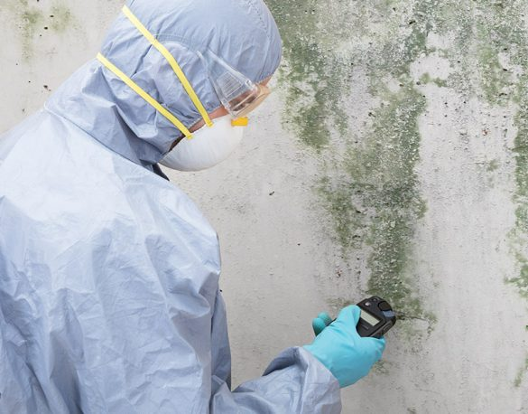 Close-up Of A Pest Control Worker Standing In Front Of Damaged Wall